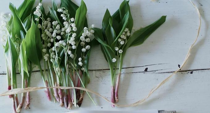 壁に飾られた「ZAIKUCRAFT」のお花たち