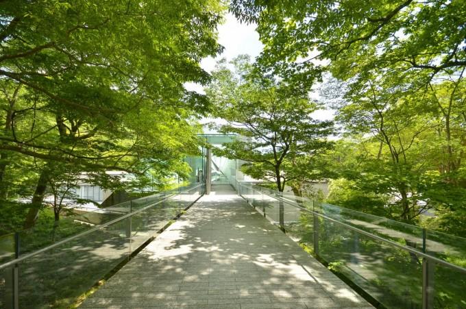 木が茂ったポーラ美術館の道