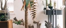 """広々としたリビングで、""""サボテン""""を中心としためずらしい植物たちと一緒に成長する暮らし"""