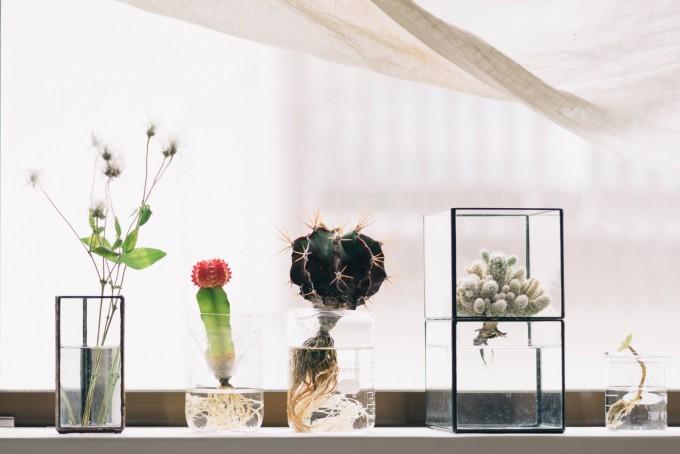 goodroomのリノベーション賃貸「TOMOS(トモス)」に暮らすAtsushiさんお気に入りの植物たち