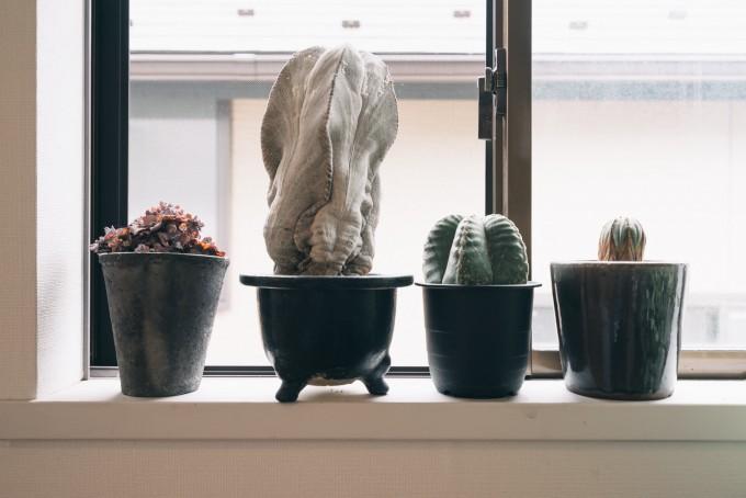 goodroomのリノベーション賃貸「トモス」にはサボテンや観葉植物を