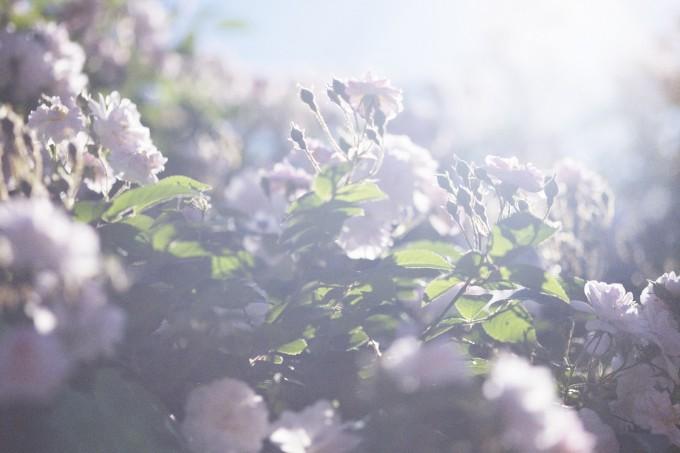 原美術館に展示される「うつくしい日々」キービジュアルになる蜷川実花が撮影した花の写真