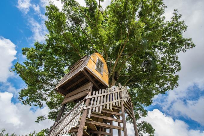 キャンプ場「一番星ヴィレッジ」にあるツリーハウス