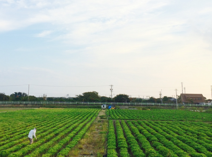落花生の畑と空の写真