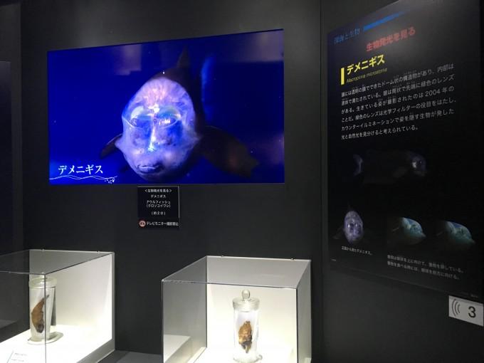 深海2017 発光生物の展示