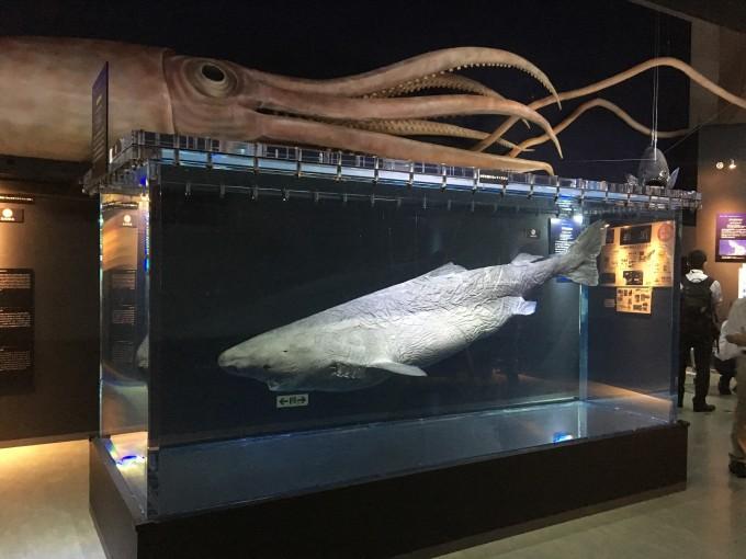 深海2017 巨大な深海生物の展示