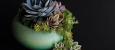 暮らしを彩る多肉植物の写真(TOKIIRO)