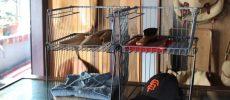 見せる収納術。お部屋がすっきり美しくなる「BRID」のワイヤーラック