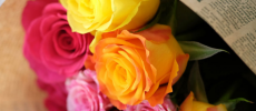 「AFRIKA ROSE」の色鮮やか、強いプレゼントにもぴったりの花束