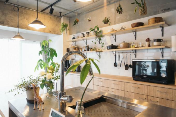植物が置かれたキッチンの写真