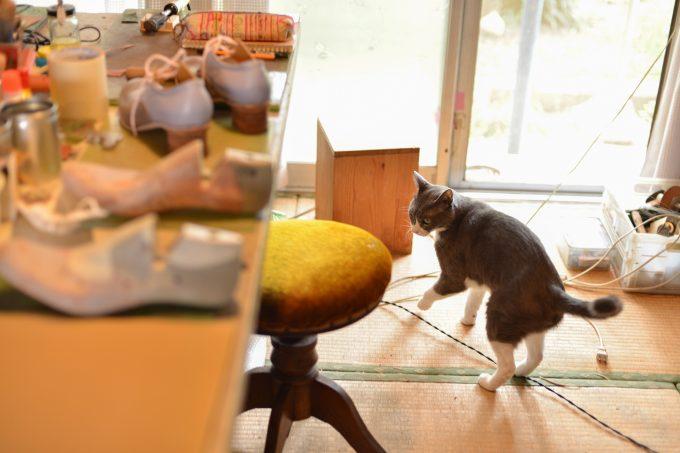 工房を歩く猫のタビくん