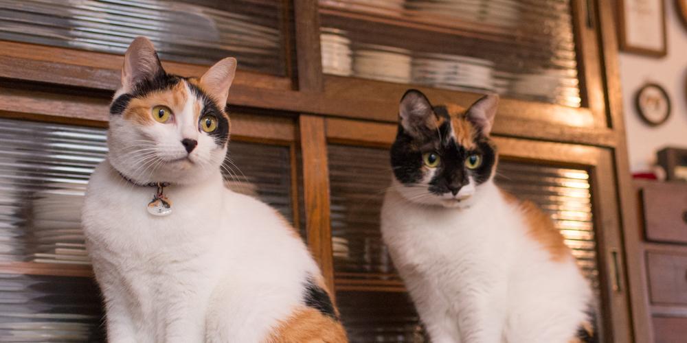 印菓子屋の三毛猫姉妹