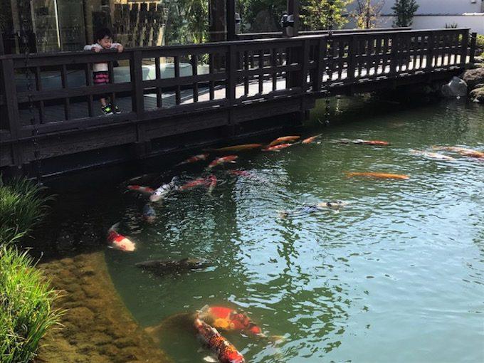 """福岡にある""""鯉の泳ぐ街の風景の一部"""""""