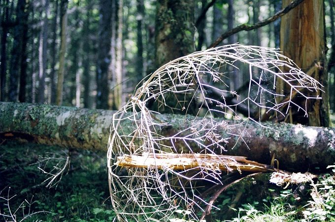IN THE FORESTのアクセサリーにインスピレーションを与える森