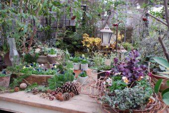 月に3日だけオープンする花屋「C'est la vie」は、植物も人間もゆったり呼吸できる空間