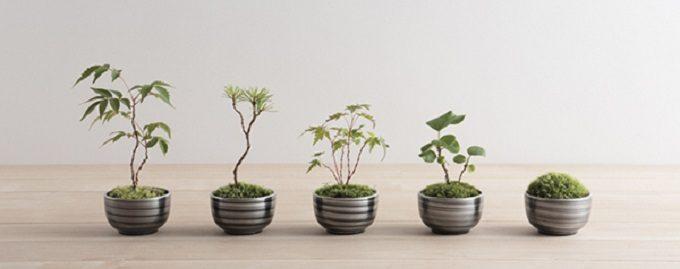 """""""ちょこっと盆栽″を気軽に楽しめる「ちょこぼん」"""