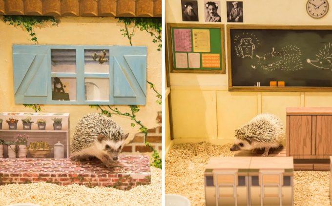 ドールハウスで生活するハリネズミの写真