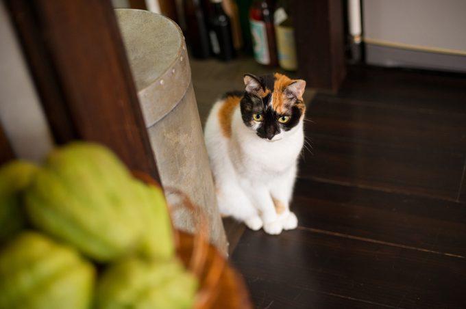 かわいい三毛猫のあずきちゃん