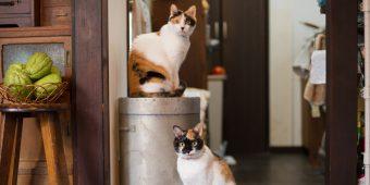 猫が教えてくれること「みんな違って、みんな良し」/寅印菓子屋の三毛猫姉妹の場合vol.2