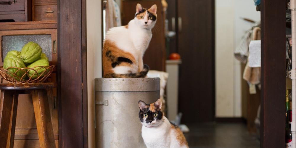 『寅印菓子屋』の可愛い三毛猫姉妹