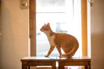 猫が教えてくれること「環境第一」/ミュージシャン笹倉さんちのトトちゃんの場合vol.1
