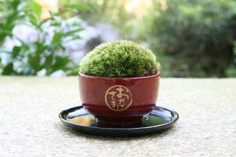 インテリアに風情な和み。苔の緑が鮮やかで可愛らしい、小粋なミニ盆栽「ちょこぼん」