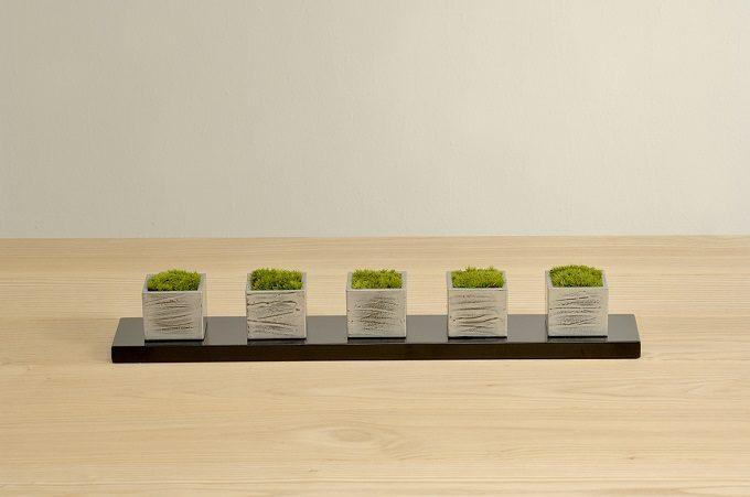 小粋なミニ盆栽ちょこぼん5種