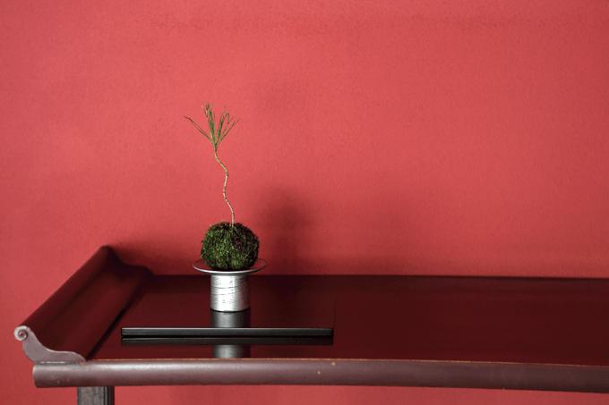 和モダンなインテリア「ミニ盆栽×漆器 ちょこぼん」のディスプレイ風景