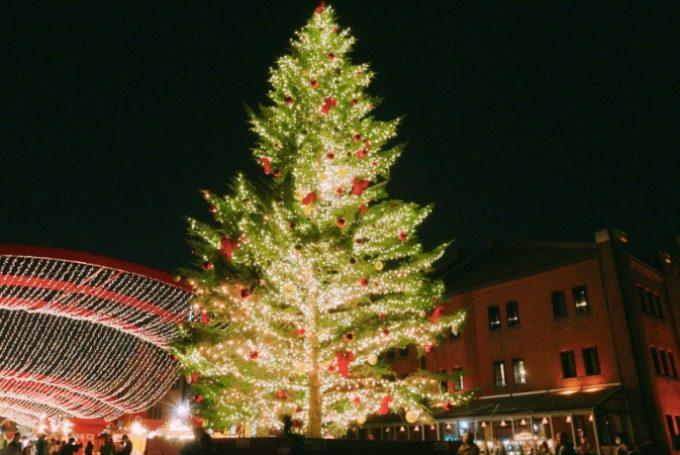 「横浜赤レンガ倉庫」のクリスマスツリーの写真