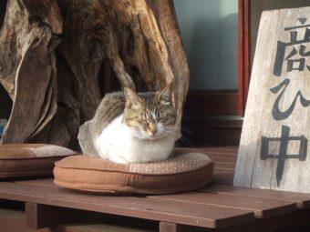 栃木県・那須高原にある、看板猫がお出迎えしてくれる古民家カフェ「夢屋」