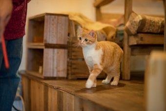 猫が教えてくれること「優しい気持ち」/ミュージシャン笹倉さんちのトトちゃんの場合vol.2