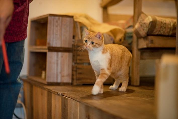 かわいい子猫のトトちゃん