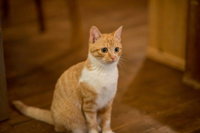 遠くを見つめるかわいい子猫のトトちゃん