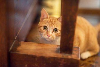 猫が教えてくれること「真っ直ぐ」/ミュージシャン笹倉さんちのトトちゃんの場合vol.3