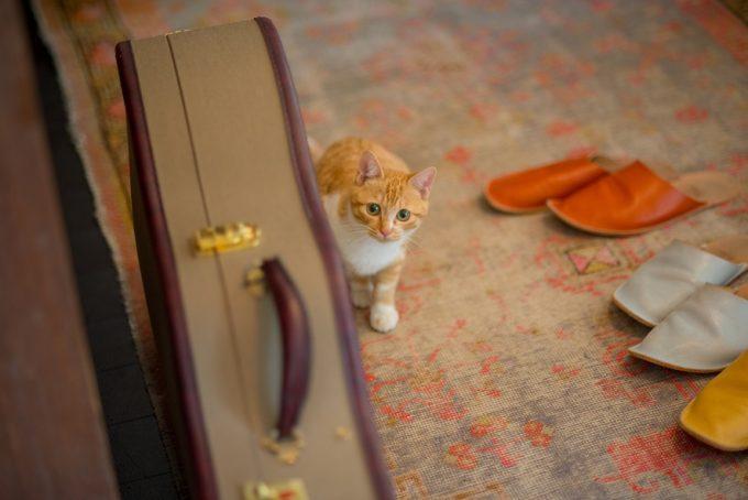 物陰から様子をうかがうかわいい子猫のトトちゃん