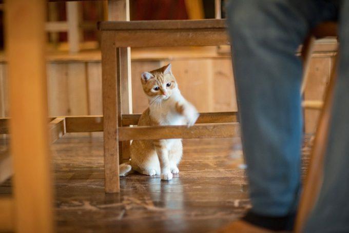 笹倉さんの足元で遊ぶかわいい茶トラの子猫トトちゃん
