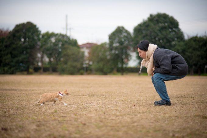 笹倉さんと散歩に出かけるかわいい子猫のトトちゃん