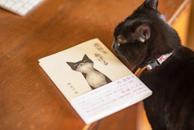 紙版画作家の坂本千明さんの本「退屈をあげる」と黒猫