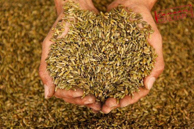 青麦をローストして乾燥させた「フリーカ」