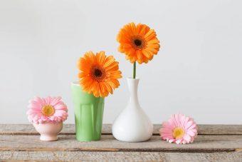 「一輪挿し」でお花を楽しむ。選び方とおしゃれな陶器・ガラス花瓶特集