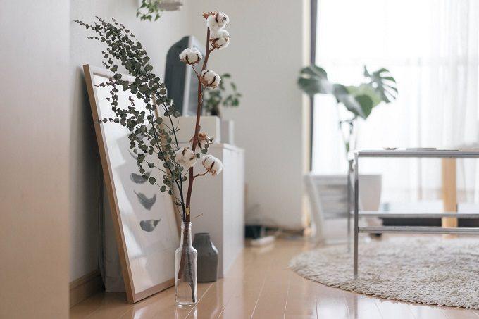 部屋のポイントとして置かれた植物