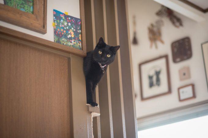 イラストレーター坂本さんが飼っている黒猫の墨ちゃん
