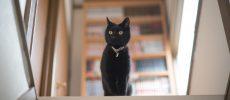 紙版画作家・坂本千明さんの飼っている黒猫