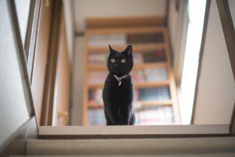 猫が教えてくれること「猫のしあわせ」/紙版画作家・坂本さんが出会った猫たちの場合vol.3