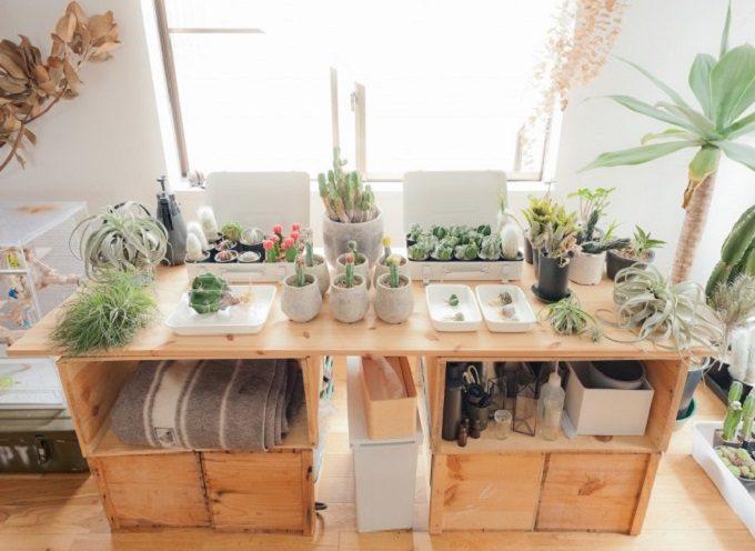 木箱の収納と緑の多い部屋