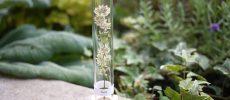 山形発のボトルフラワー「lien」で、待ち遠しい春をひと足はやくお部屋に呼びこもう