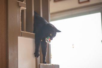 猫が教えてくれること「気にするな」/紙版画作家・坂本さんが出会った猫たちの場合vol.2