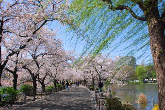 東京・上野エリアで花見とアートが堪能できちゃう、お出かけスポット<3選>