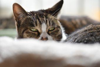 猫が教えてくれること「日々是葛藤」/木工作家・サノアイさんの場合vol.2