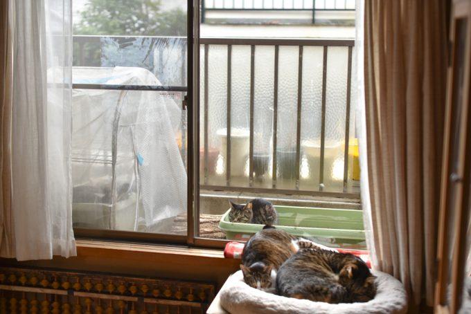 ベランダにいる猫と家の中の猫